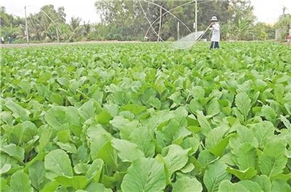 Vì sao doanh nghiệp không dám đầu tư vào nông nghiệp?