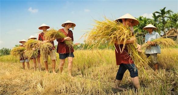 Khách Tây thích cưỡi trâu, cấy lúa và sức hút của du lịch nông nghiệp