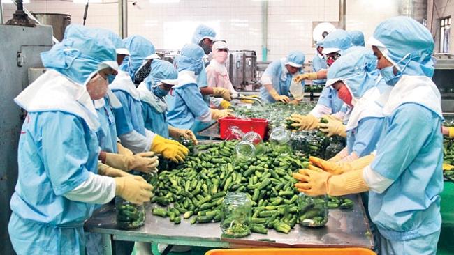 Chìa khóa để nông sản Việt 'đi được đường xa, ra được chợ lớn'