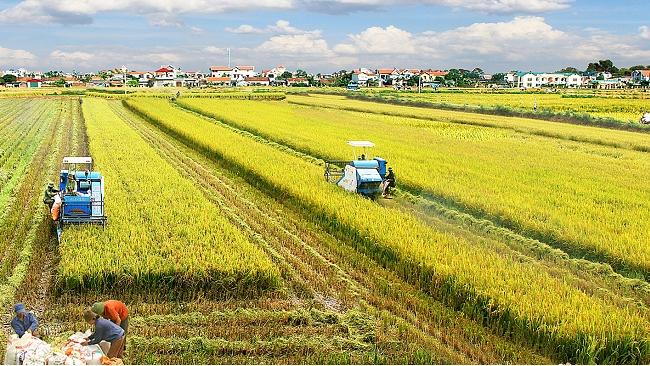 Gỡ nút thắt cho nông nghiệp Việt