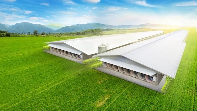 Đưa chuồng trại công nghệ cao Lysaght Agrished vào trang trại lớn