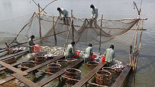 Xuất khẩu thủy sản đặt mục tiêu 9 tỷ USD vào năm 2020
