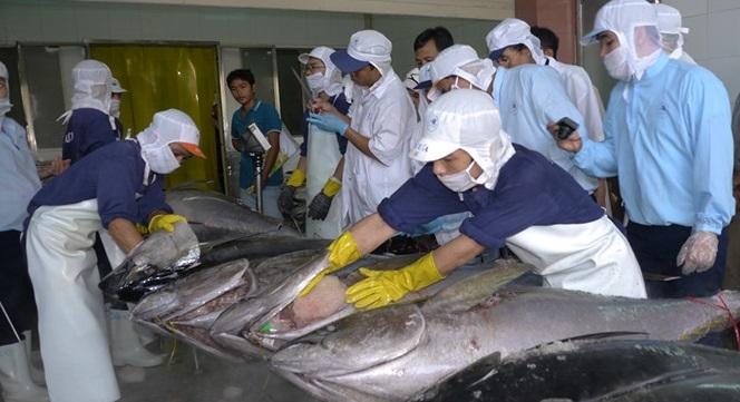 EU 'rút thẻ vàng', xuất khẩu thủy sản sẽ thiệt hại nghiêm trọng
