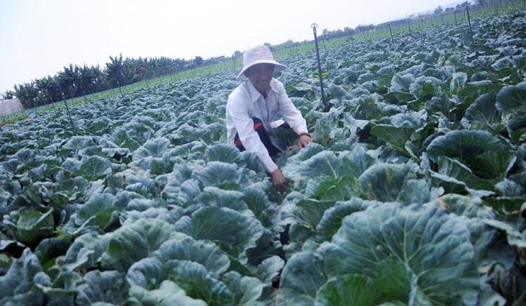 Nông dân đổi đời trên cánh đồng công nghệ