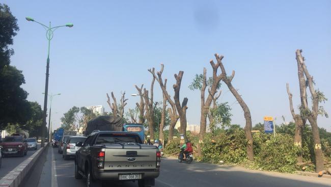 Cận cảnh những cây xanh đầu tiên bị chặt hạ trên đường Phạm Văn Đồng