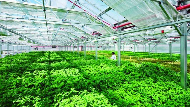 Thái Nguyên gọi vốn cho 19 dự án nông nghiệp công nghệ cao