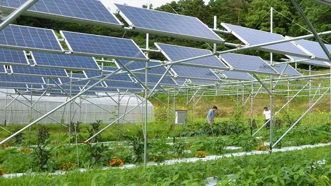 Thấy gì từ những kế hoạch điện mặt trời đầy tham vọng ở Việt Nam?