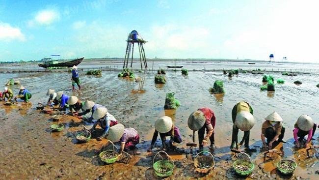 Thành lập Khu kinh tế ven biển Thái Bình quy mô hơn 30 nghìn ha