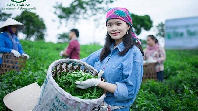 Startup Bích Ngọc và mục tiêu đưa chè sinh thái Việt Nam ra thế giới