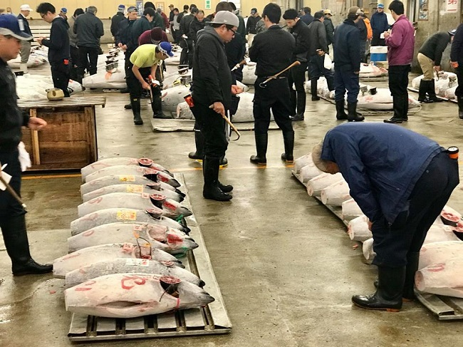 Nhộn nhịp phiên chợ đấu giá cá ngừ lớn nhất thế giới 2