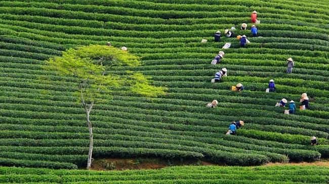 Đâu là những địa điểm đẹp nhất Việt Nam? 16