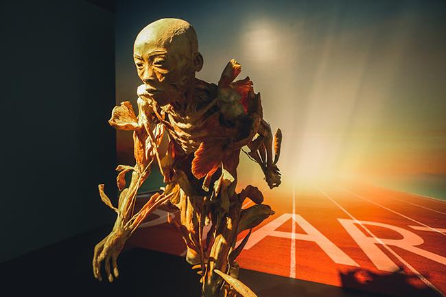 """Khám phá """"Sự bí ẩn đặc biệt của cơ thể người"""" đầu tiên tại Việt Nam 1"""