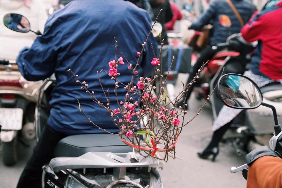Xuân về trên phố 7