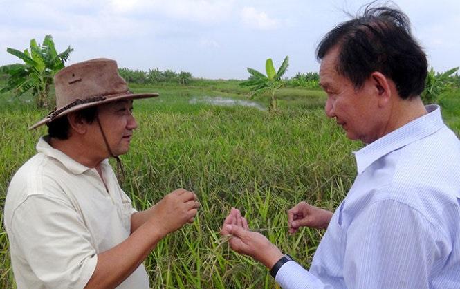 Hành trình ngược dòng của Võ Minh Khải với hạt gạo hữu cơ 2