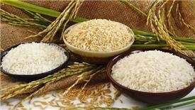 Làm sao để 'hạt gạo làng ta' vươn ra ngoài thành công?