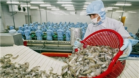 EVFTA kỳ vọng tạo sự đột phá lớn cho xuất khẩu tôm Việt Nam