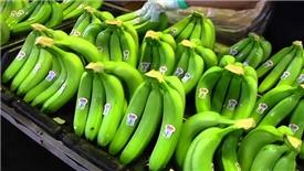 Lợi nhuận của Hoàng Anh Gia Lai giảm sâu trước mùa thu hoạch trái cây