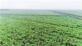 Ban lãnh đạo Thành Thành Công – Biên Hoà liên tiếp đăng ký mua 4 triệu cổ phiếu của công ty
