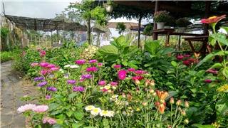 'Trường học thiên nhiên' tươi đẹp cho xu hướng sống xanh