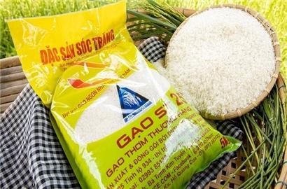Từ biến cố gạo ST25 nhìn về chiến lược thương hiệu và thị trường cho nông sản Việt
