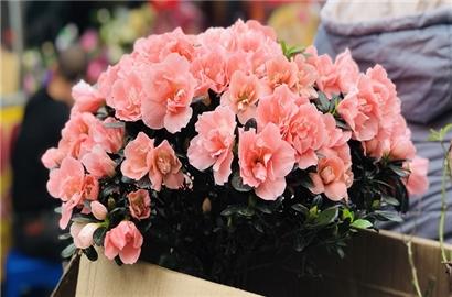 Hương sắc Tết nơi chợ hoa phố cổ Hà Nội