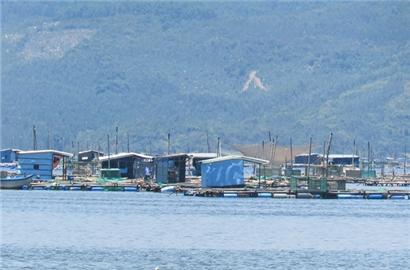 Phú Yên muốn đột phá phát triển ngành tôm