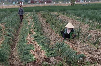 Tắc tiêu thụ nông sản vùng dịch