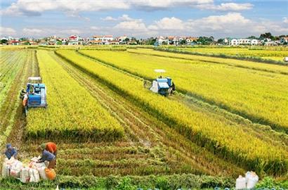 Cấp bách cứu lúa gạo đồng bằng sông Cửu Long