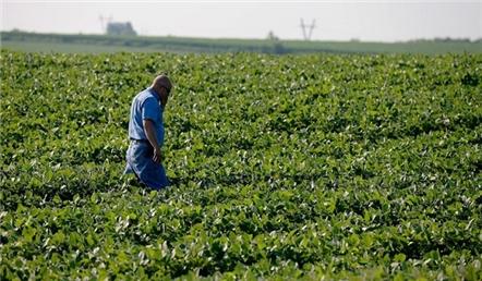 Mỹ tung gói hỗ trợ nông dân giữa chiến tranh thương mại