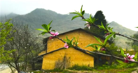 Ngất ngây hương vị Xuân nơi đá nở hoa