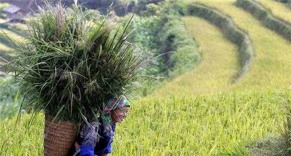 Những nghịch lý trong sản xuất nông nghiệp