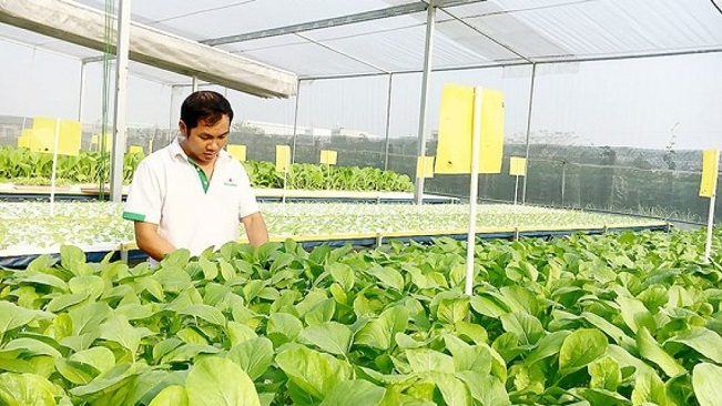 Đề xuất cắt giảm 70% điều kiện kinh doanh trong lĩnh vực nông nghiệp