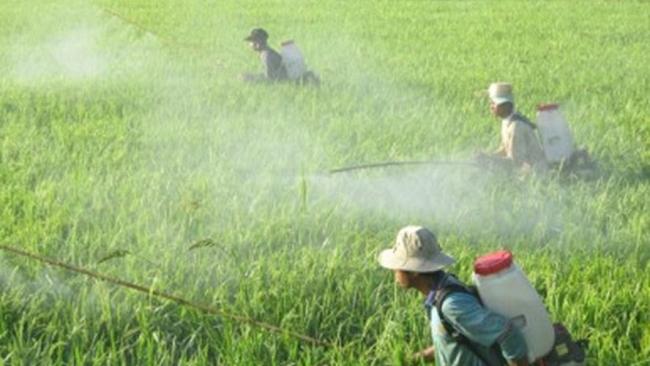 IFC và New Zealand hỗ trợ 1.000 nông dân và 20 trang trại sản xuất theo chuẩn Global G.A.P