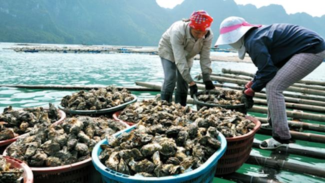 Quảng Ninh gỡ khó cho nông sản mùa dịch Covid-19