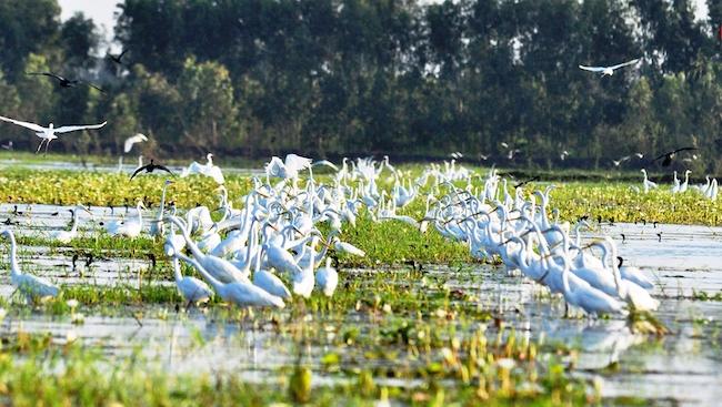 Khôi phục hệ sinh thái đang bị suy thoái ở Đồng bằng sông Cửu Long
