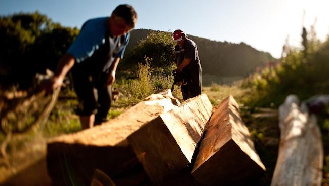 Chiến lược phục hồi của doanh nghiệp chế biến gỗ