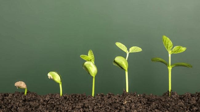 Lo sinh tồn mà nhiều doanh nghiệp quên mất mục tiêu phát triển bền vững