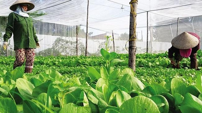 4 điểm nghẽn chính của ngành nông nghiệp trong năm 2019
