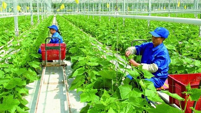Việt Nam lọt Top 2 khu vực về triển vọng phục hồi nông nghiệp thực phẩm
