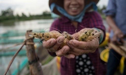 Đổi đời nhờ nuôi tôm ở Việt Nam