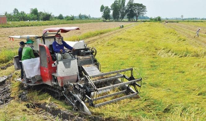 Trồng lúa, nông dân Việt khó ngẩng đầu