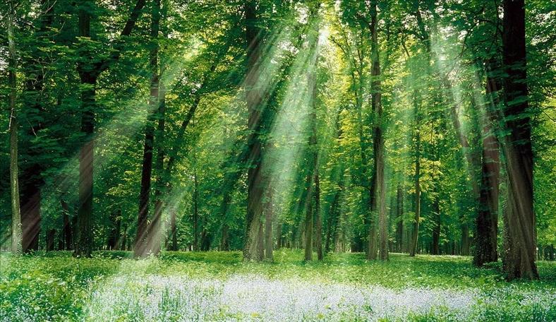 Thủ tướng phê duyệt Đề án Quản lý rừng bền vững và Chứng chỉ rừng