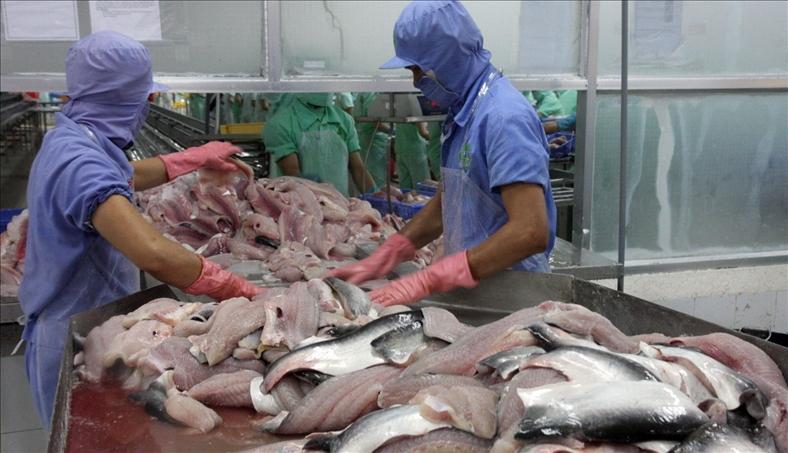 Mỹ 'soán ngôi' Trung Quốc về nhập khẩu cá tra Việt Nam