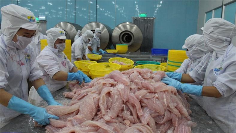 Năm nay, thời tiết và thị trường tiêu thụ có lợi cho nuôi cá tra và tôm nước lợ