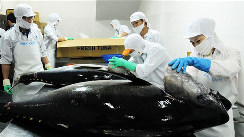 VASEP cầu cứu Bộ Nông nghiệp giải phóng các container cá ngừ dồn ứ tại cảng