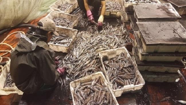 Phục hồi nguồn lợi thủy sản từ tiền bồi thường của Formosa