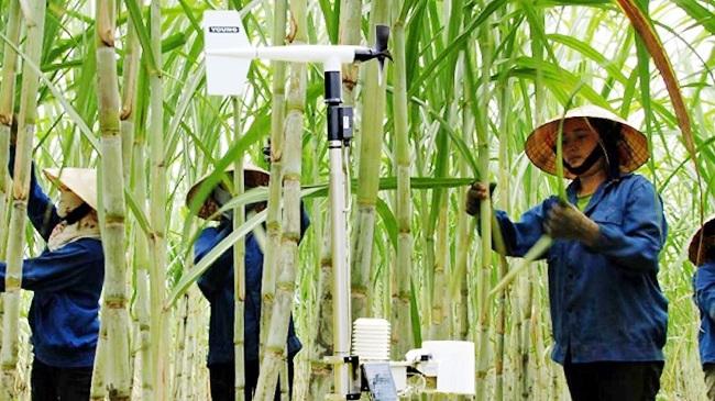 Phát triển nguồn năng lượng thay thế từ ngành mía đường