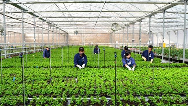 Đã đến lúc xem lại nền nông nghiệp vô cơ