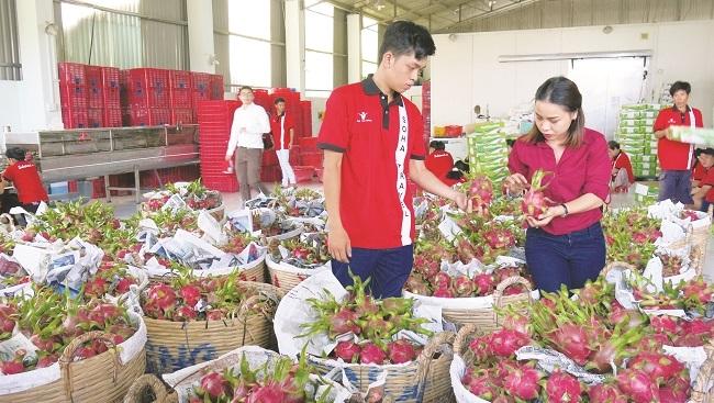 Dặm đường trường chinh xuất ngoại của trái cây Việt