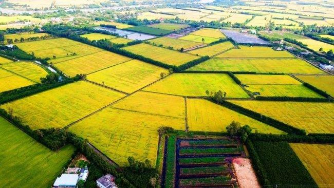 3 nút thắt để phát triển bền vững đồng bằng sông Cửu Long